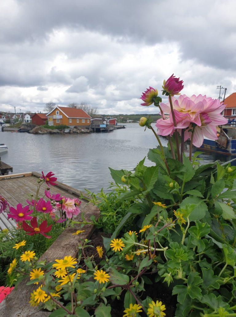 Blomterkassene på brygga pryder utsikten i Nevlunghavn